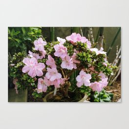 Pink Tree Canvas Print