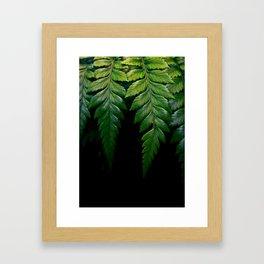 Hanging Fern Framed Art Print
