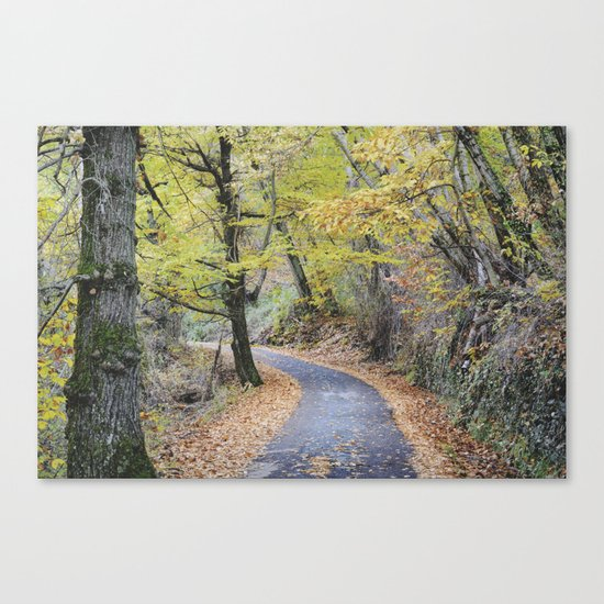 Into the autumn woods Canvas Print