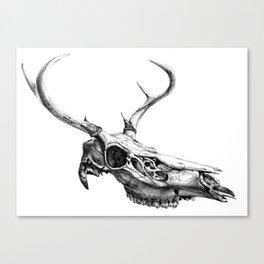 Deer Skull Canvas Print