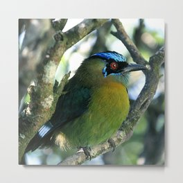 Costa Rican Treasure: The Mot Mot Bird Metal Print