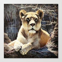 Lady Lion  Canvas Print
