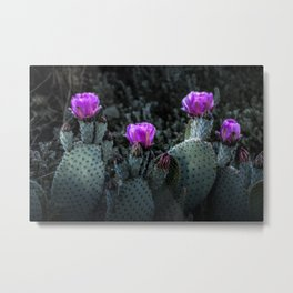 Cactus Blooming in the Anza-Borrego Desert State Park, Southern California Metal Print