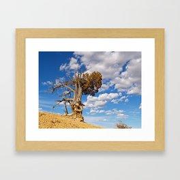 Bristlecone Pine at Bryce Canyon Framed Art Print