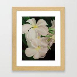 white plumerias II Framed Art Print