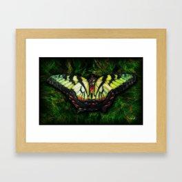 Tiger Swallowtail Framed Art Print