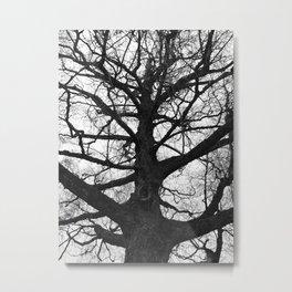 Pittock Tree Metal Print