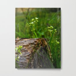 Alabama Backyard Metal Print