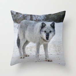 Lone wolf of the Canadian Rocky Mountains Throw Pillow