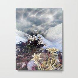 Edelweiss Winter Metal Print