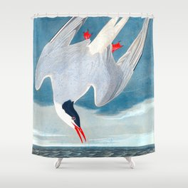 Arctic Tern Bird Shower Curtain