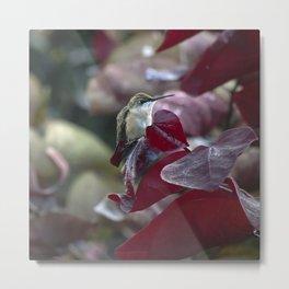 Hummingbird Hiding in Red Bud Tree Metal Print