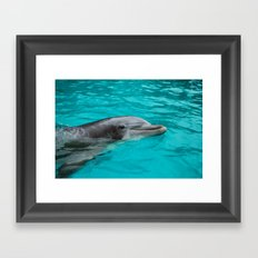 Dolphin.  Framed Art Print