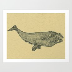 Northern Right Whale Art Print