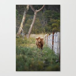 Beast of the Southern Wild II Canvas Print