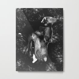 dog days Metal Print
