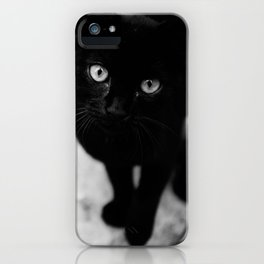 Croatian Kitten iPhone Case