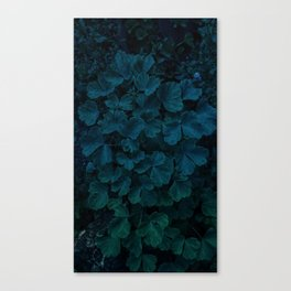 Columbine Leaves Canvas Print