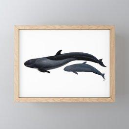 False killer whale Framed Mini Art Print