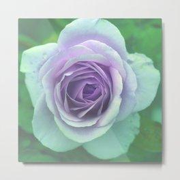 bed of roses: underwater rose Metal Print