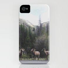 Bighorn Sheep Slim Case iPhone (4, 4s)