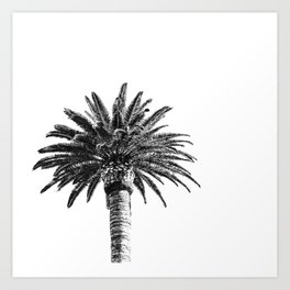 Lush Palm {2 of 2} / Black and White Sky Tree Leaves Art Print Art Print