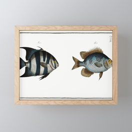 1 Angel-fish of Curacoo (Chaetodon Curacao) 2 Smith (Chaetodon Faber) from Ichtylogie ou Histoire na Framed Mini Art Print