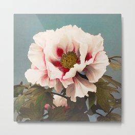Ogawa Kazumasa - Tree Peony Metal Print