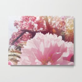Cherry blossoms sakura Metal Print