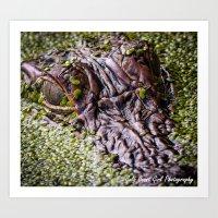 Gators Eye Art Print