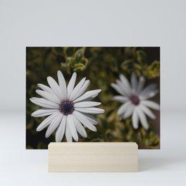Shasta Daisy Pair Mini Art Print