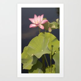 Pink Lotus by Teresa Thompson Art Print