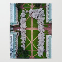 UW Cherry Blossoms: Spring Poster