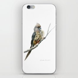 Speckled Mousebird by Teresa Thompson iPhone Skin