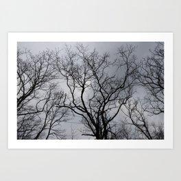 Black naked trees, creepy forest Art Print