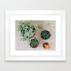 Drought Friendly Plants Framed Art Print