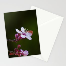 Hill Cherry Stationery Cards