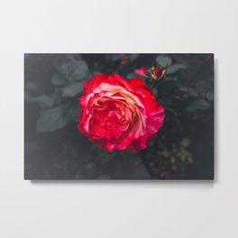 Night Rose 2 Metal Print