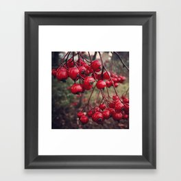 Christmas Holiday Red Berries Framed Art Print