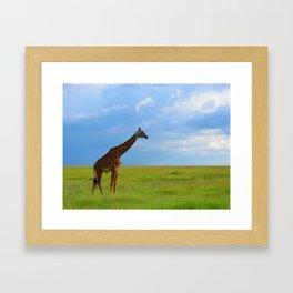 Lone giraffe Framed Art Print