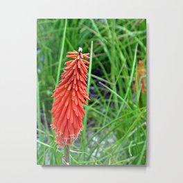 Single Orange Floral Bloom Metal Print
