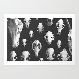 b+w skulls Art Print