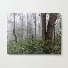 Smoky Mountain Summer Forest III - National Park Nature Photography Metal Print