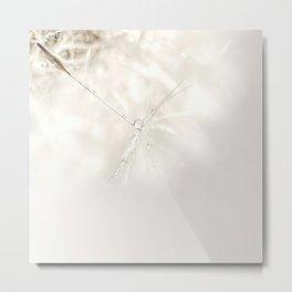 Sparkling dandelion seed head with droplet Metal Print