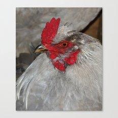 Ameraucana Rooster Canvas Print