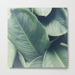 NATURE - GREEN - LEAVES - VEGETATION Metal Print