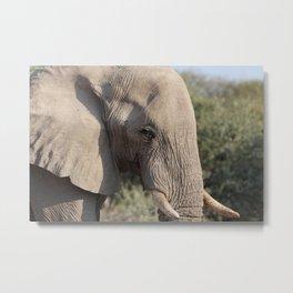 Elephant 9 Metal Print