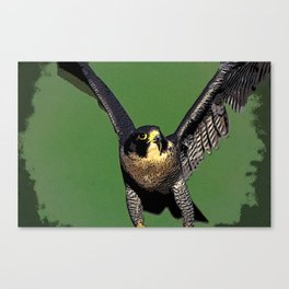 Falcon Follies Canvas Print