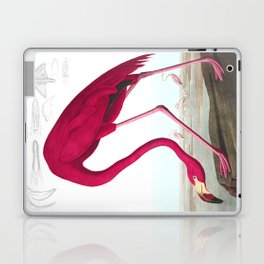 Flamingo Vintage Scientific Bird Illustration Laptop & iPad Skin