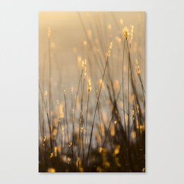 Tall Grass in Camargue Canvas Print